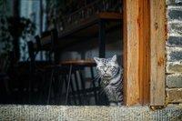 在黄姚,做一只猫也感觉幸福