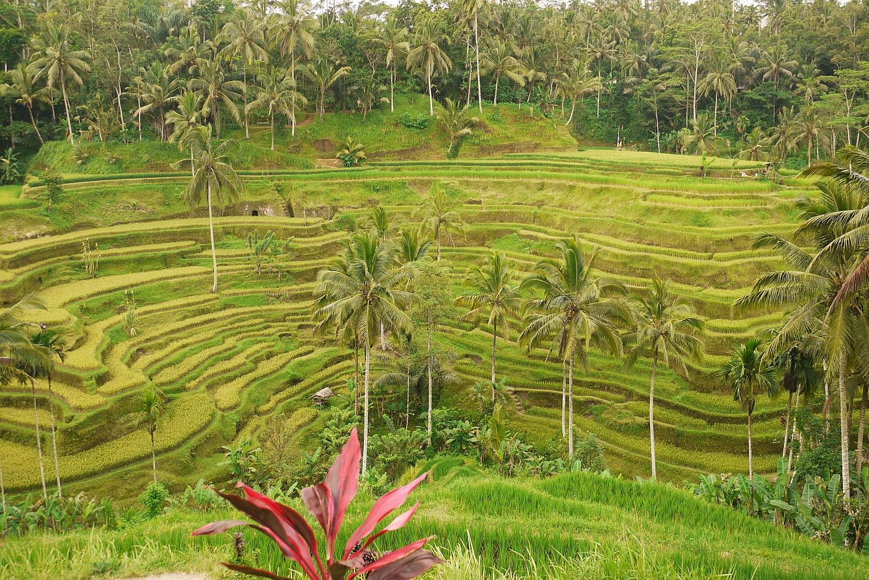 巴厘岛第三天