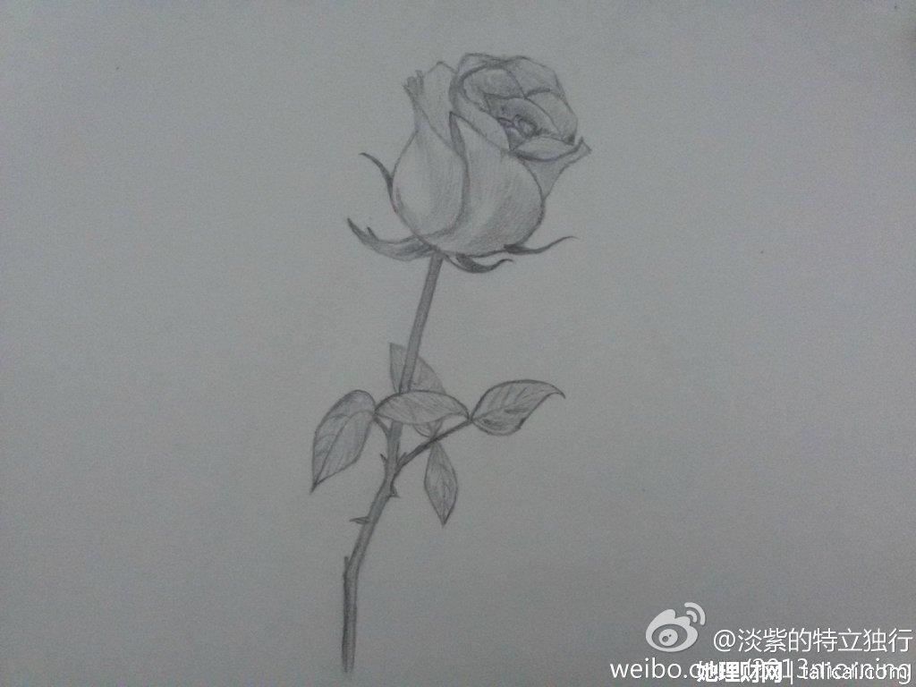 我的素描时光:玫瑰