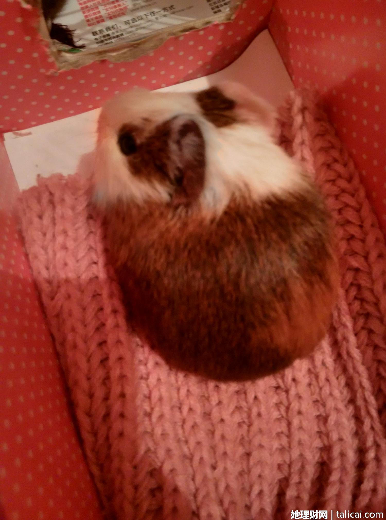 可爱猪猪萌宠手机壁纸