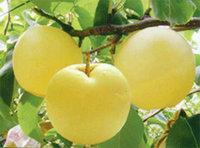 #秋天水果季#葡萄,橙子与梨