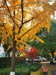 最近拍的秋冬交替的美景