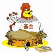 说说2021上半年养鸡得与失