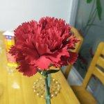 给未来婆婆的康乃馨