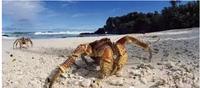 椰子蟹-让吃货的味蕾跳一曲探戈