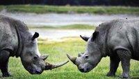 """吓坏股市的""""灰犀牛""""来了,你却还不知道它是啥?"""