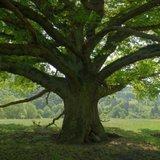 日常的自由:百年老树的福祉