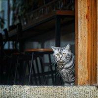 在黃姚,做一只貓也感覺幸福