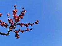 春节期间的美食和美景