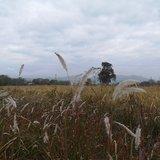 故乡的云,故乡的草