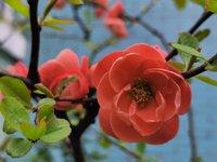花儿开在春风里