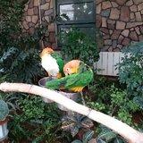 南宫植物园里美丽的鹦鹉