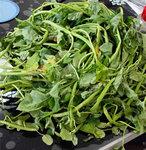 自己家的农家乐,自己家的小菜园,教你认识下蔬菜