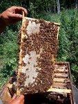 7月蜂蜜开卖,不能再佛系下去了,得帮老妈分担点